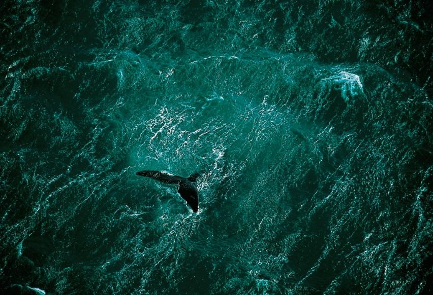 Passion-Bleue-Yann-Arthus-Bertrand